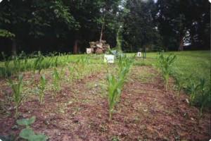 garden - reduce carbon footprint