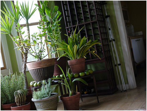 Four eco friendly ways to improve air quality in your home ways2gogreen blog - Plants can improve ambience home ...