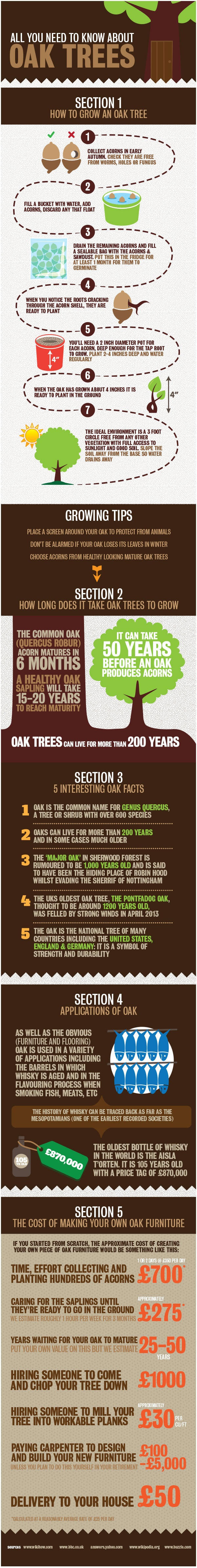 know about oak trees