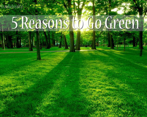 go green without breaking the bank