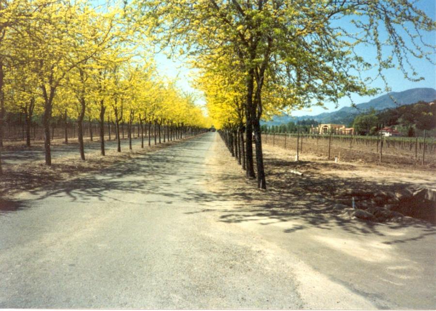 5 eco-friendly destinations in Napa Valley