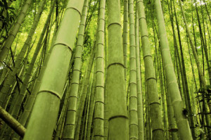 why should you choose bamboo