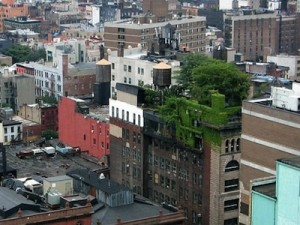 green roof - green cooling haven