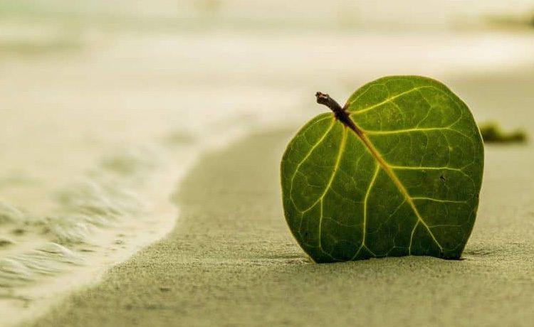 Essay on Go Green Save Future | Ways2GoGreen
