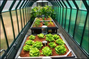 combating climate change - aquaponics