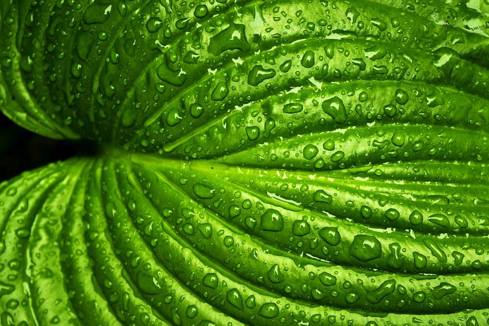 leaf-749929_960_720