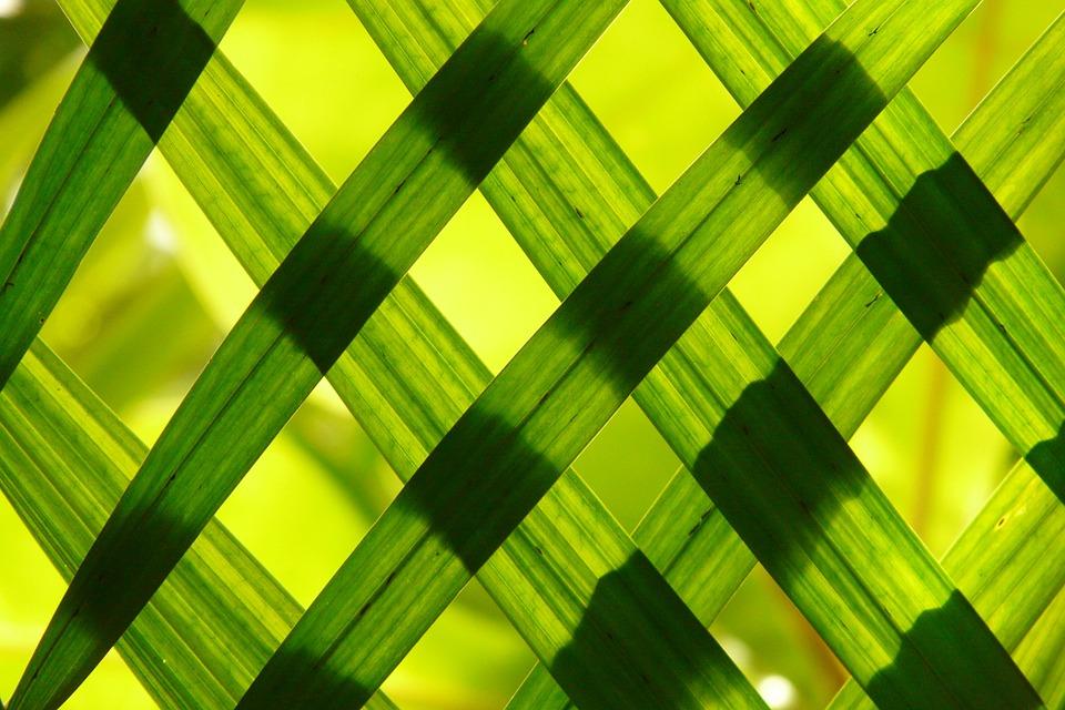 leaves-108969_960_720