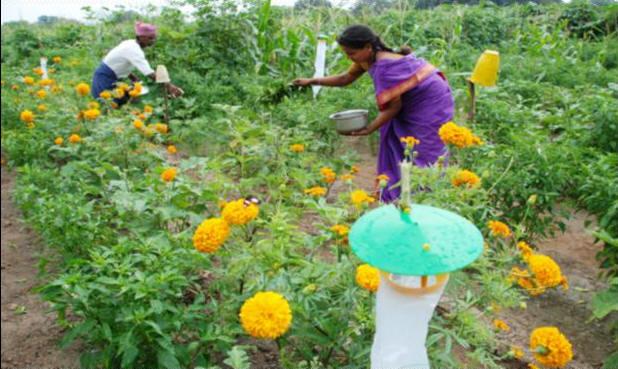 flower garden - eco friendly pesticides