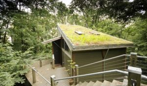 roof garden - home eco-friendly