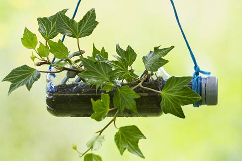 recycling skills - water bottles in garden