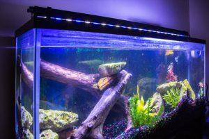fish tank with LED lighting