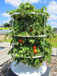 grow your own food - tower garden tomatoes
