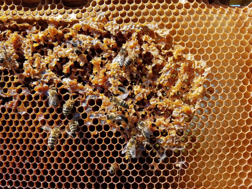 honeycomb - uses for honey