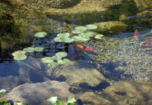 build a pond in your garden