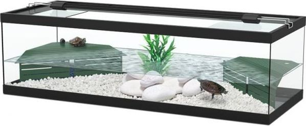 3 Benefits Of Having A Turtle Tank In