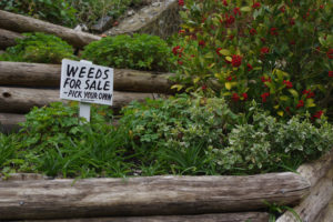 one of the threats to your garden is weeds