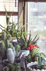 cacti indoor own garden