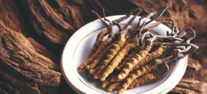 herbs - Cordyceps