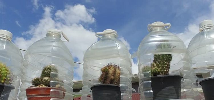 Reuse Plastic Bottle