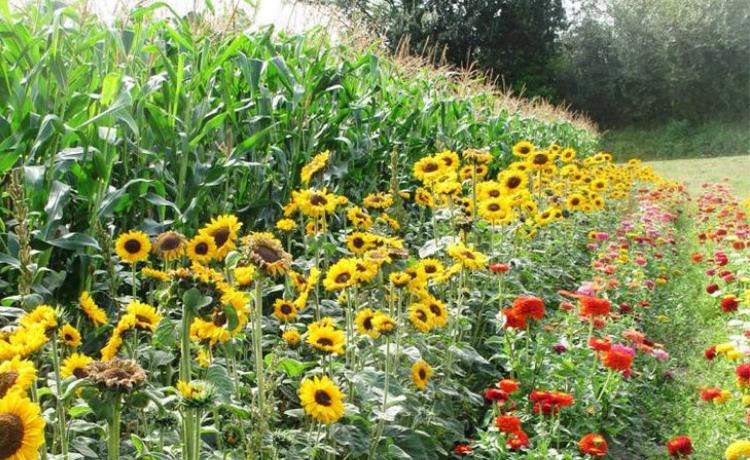Living with a garden