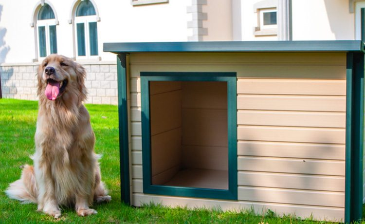 eco-friendly dog house