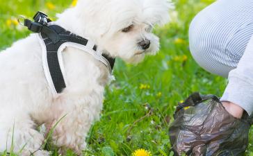 Best Compostable Dog Waste Bag