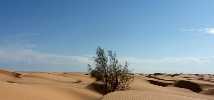 Sahara desert is in