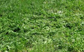 ways to get rid of garden weeds