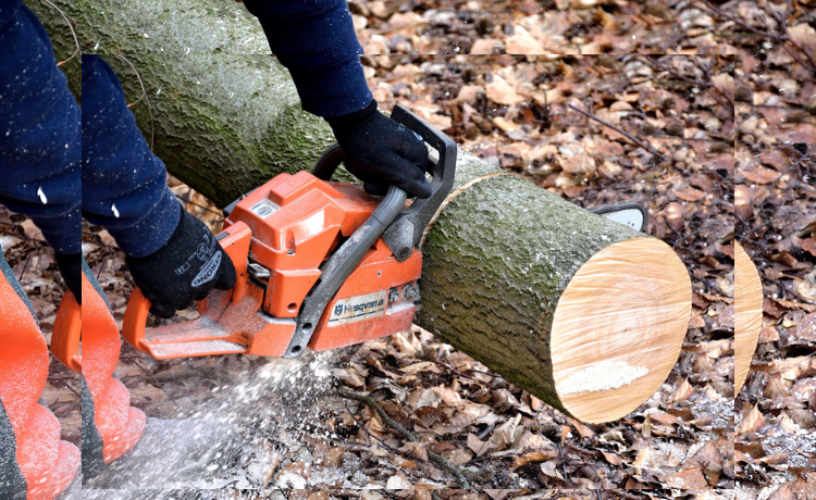 Tree Removal Service (Tips on How to Choose) | Ways2GoGreen