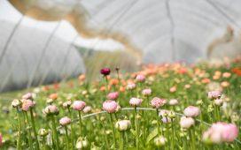 autonomous greenhouse
